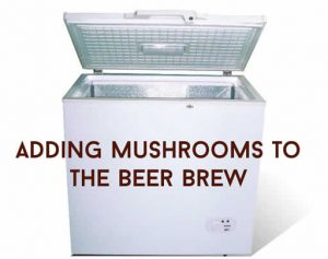 Adding Mushrooms To The Beer Brew